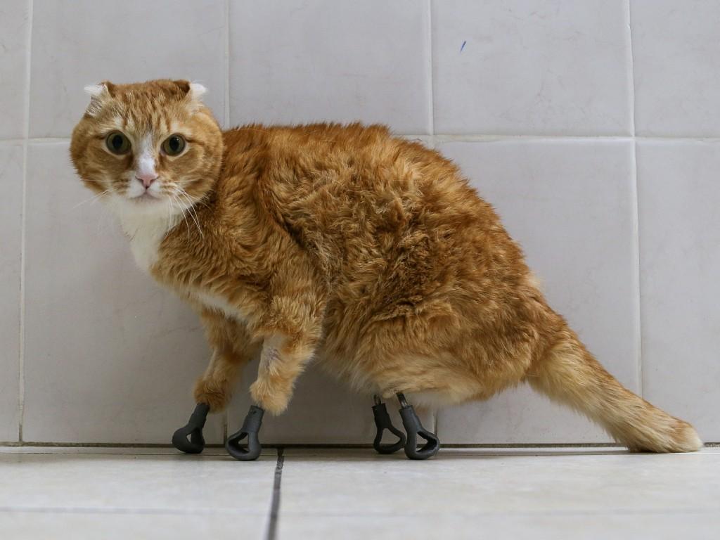 Gatos callejeros con patas protésicas