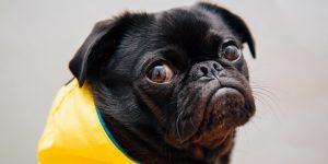 ¿Pueden las mascotas contagiarse de coronavirus?