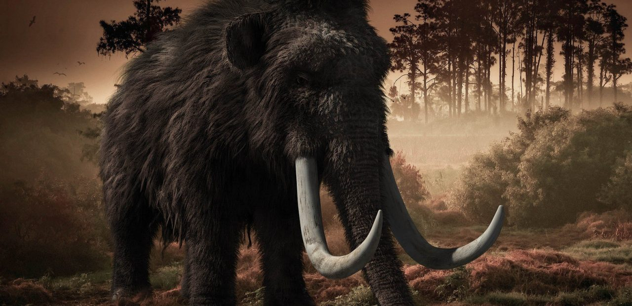 INAH mamuts Santa Lucía