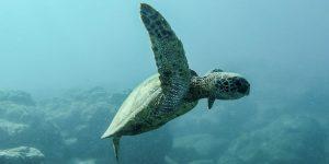 Estos son los principales desafíos que ponen en peligro a los océanos y mares del mundo