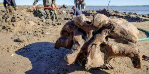 Científicos hallan esqueleto de mamut bien conservado en un lago del Ártico ruso —su antigüedad es de al menos 10,000 años