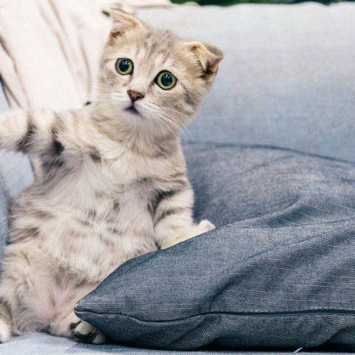 A medida que los humanos regresan al trabajo, las mascotas pueden experimentar ansiedad por separación. Así es puedes manejar la transición.