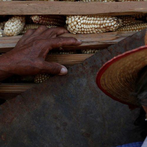 México dejará de emplear herbicidas con glifosato en proyectos gubernamentales; estos son sus usos y peligros