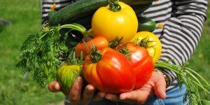 Cultivar mi propia comida durante la cuarentena me recordó que la independencia financiera es mucho más que riqueza