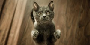 ¿Esterilizar al gato? Por qué hacerlo, cuándo es el momento ideal y qué cuidados debe tener tras la cirugía