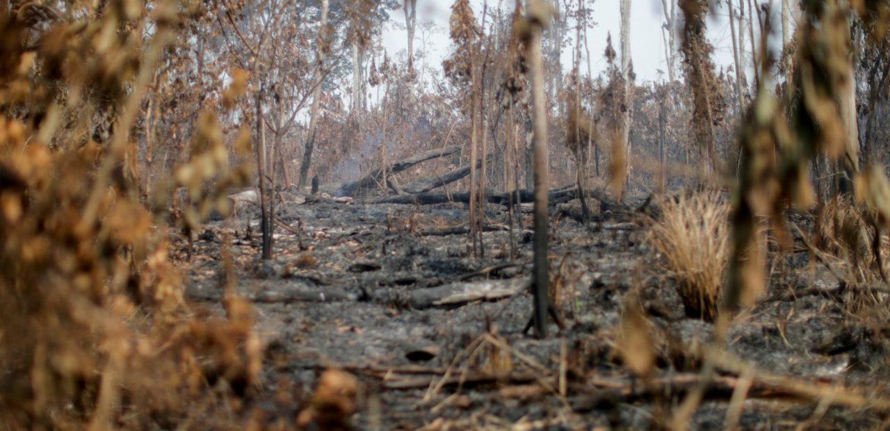 destrucción naturaleza   Business Insider México